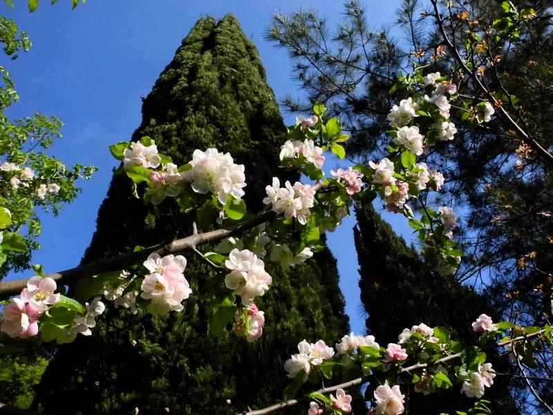 Весна в Лівадійському парку. Фото: Алла Лавриненко/Велика Епоха