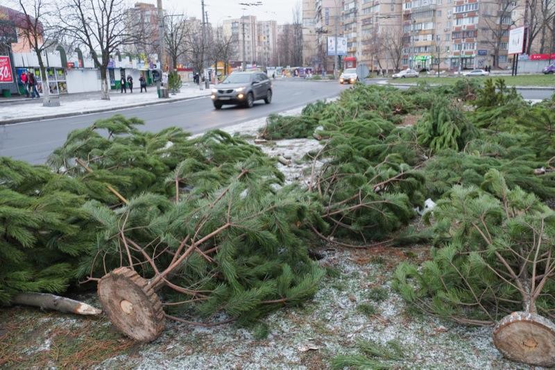 Тисячі нерозпроданих ялинок залишають валятися на вулицях. Фото: Федір Триногов