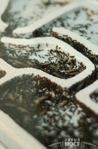 З 15 жовтня по 15 листопада у Дніпропетровську проходить виставка «Кошмаріум». Фото: Новий міст