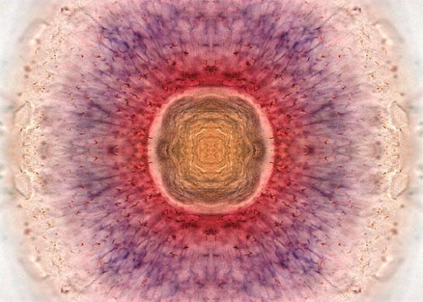 Микрофотография сетчатки глаза 3-дневной рыбки данио. Фото: life.pravda.com.ua