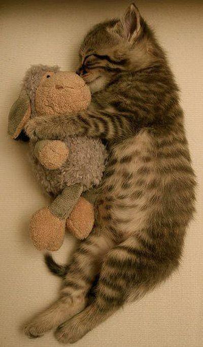 Как и где спят кошки. Фото c aboluowang.com