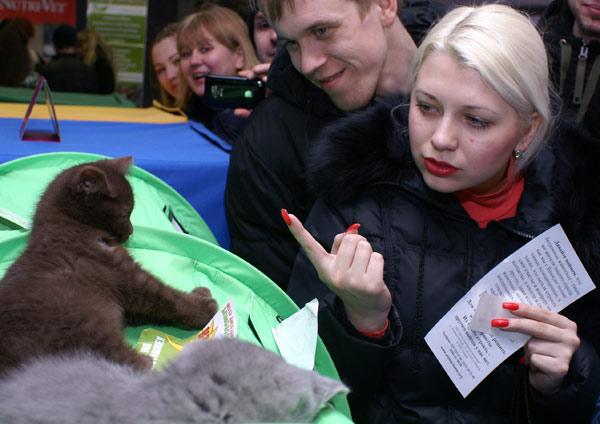 Международная выставка кошек прошла в Харькове.14 марта 2010г.Фото:Юлия Ламаалем/The Epoch Times