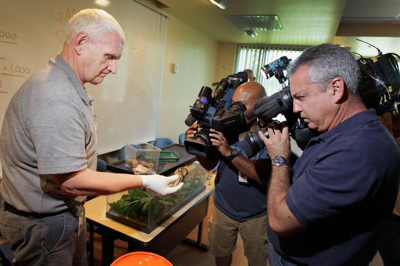 Сотрудник департамента сельского хозяйства Флориды демонстрирует улиток корреспондентам СМИ. Фото: Joe Raedle/Getty Images