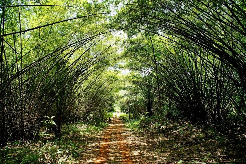 Бамбукова алея. Фото: Олександр Африканець