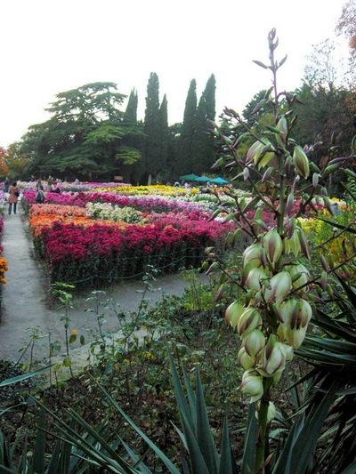 «Бал хризантем» у Нікітському ботанічному саду. Фото: Алла Лавриненко/The Epoch Times Україна
