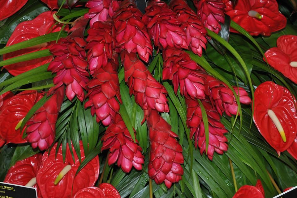 Альпінія пурпурна, або червоний імбир, на виставковому стенді товариства садівників Республіки Тринідад і Тобаго. Фото: rhschelsea/facebook.com