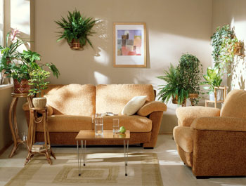 Кімнатні рослини можуть підвищити вологість повітря, очистити його від шкідливих речовин і поліпшити мікроклімат у приміщенні. Фото: floral-city.ru