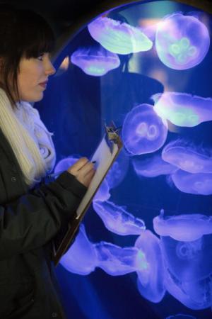 Лондон, Англия. Сотрудник зоопарка делает запись о числе медуз в зоопарке в рамках проводимой ежегодной инвентаризации. Фото: Dan Китвуд/Getty Images