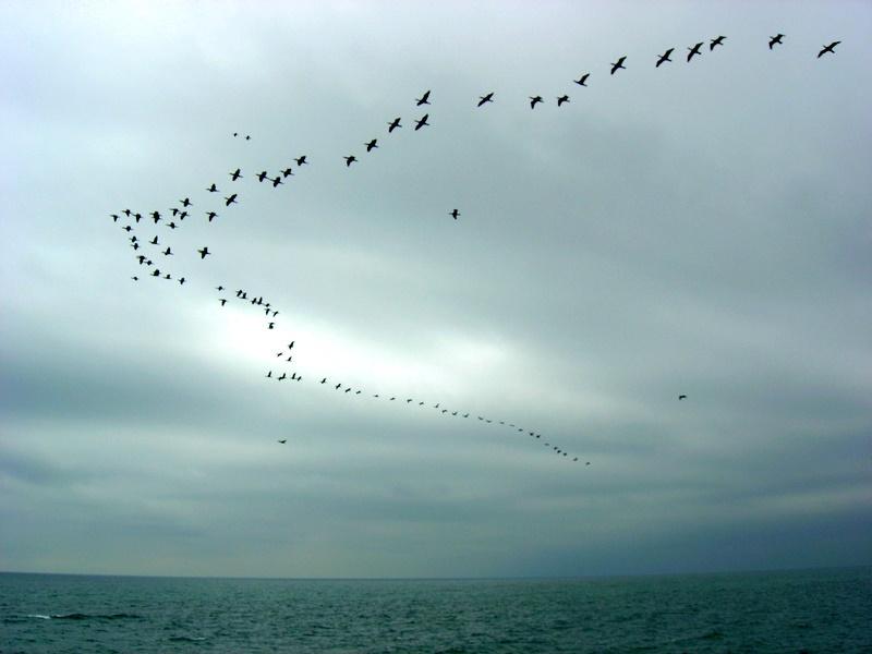 Перелітні птахи. Фото: Алла Лавриненко/The Epoch Times Україна