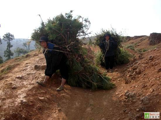 Женщины несут вязки хвороста для очага. Провинция Сычуань. Фото с epochtimes.com
