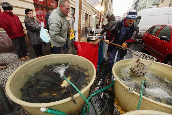 Жители Праги покупают живую рыбу. Жареный карп с картофельным салатом является традиционным чешским рождественским обедом. Прага, Чехия. Фото: Sean Gallup/Getty Images