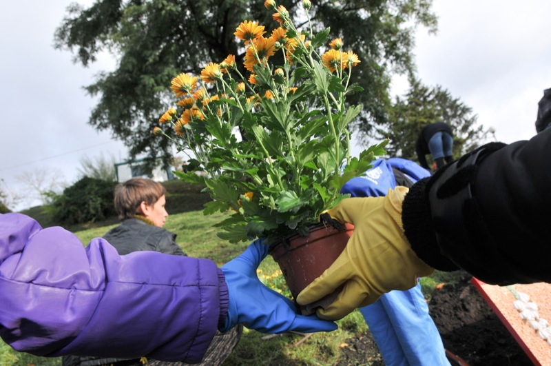 Хризантемы для создания цветочной композиции на выставке хризантем в Киеве. Фото: Владимир Бородин/The Epoch Times Украина