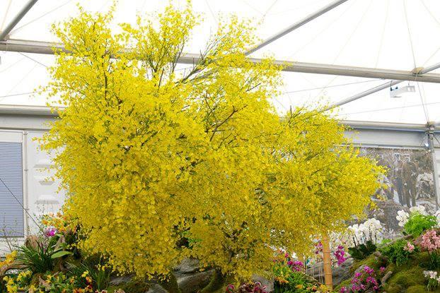 «Орхидейное дерево» на выставочном стенде Тайваня. Композиция собрана из нескольких тысяч орхидей «Лимонное сердце», прикреплённых к ветвям дерева. Фото: rhschelsea/facebook.com