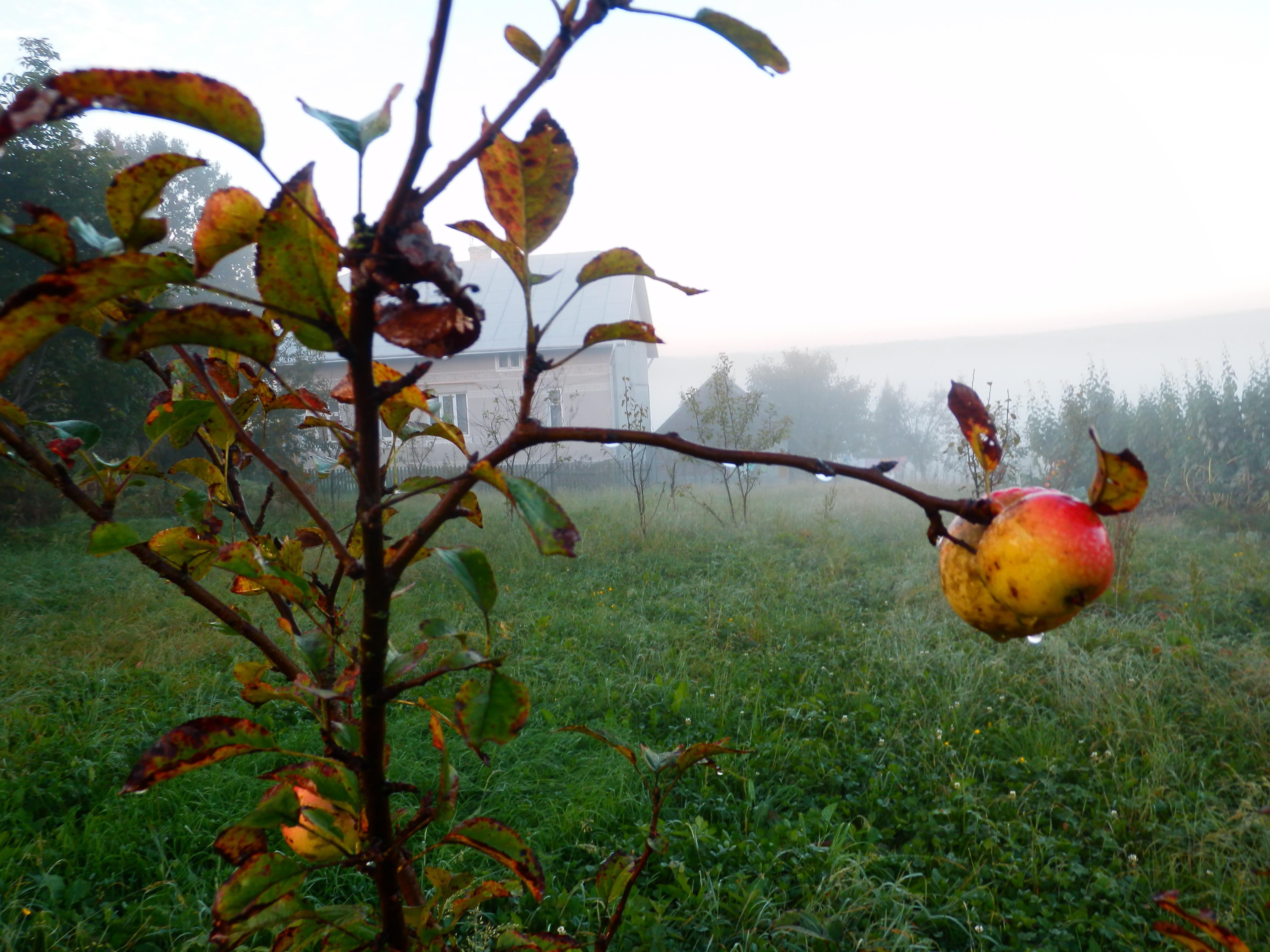 Утра Туманные Соком Седым круто заманят — и скроют Следы!