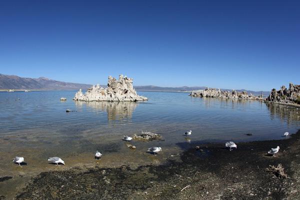 З дна озера почали виникати дивовижні природні утворення сірого кольору, що нагадували пористу пемзу, а вулканічні процеси на дні озера все ще тривають. Фото: GABRIEL BOUYS/AFP/Getty Images