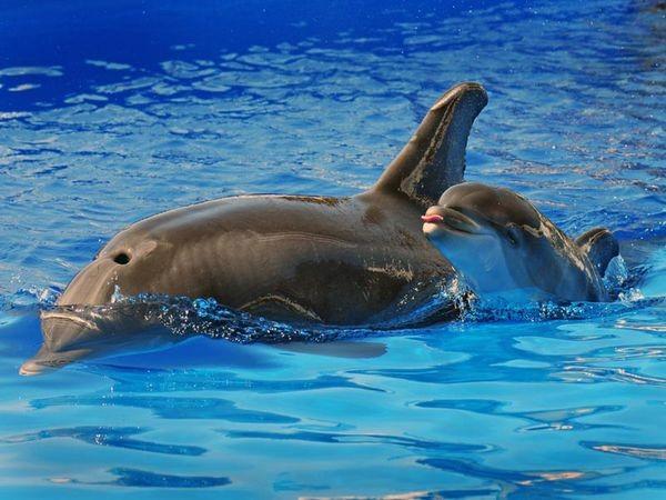 Мать и дитя в Царстве животных. Фото: AFP