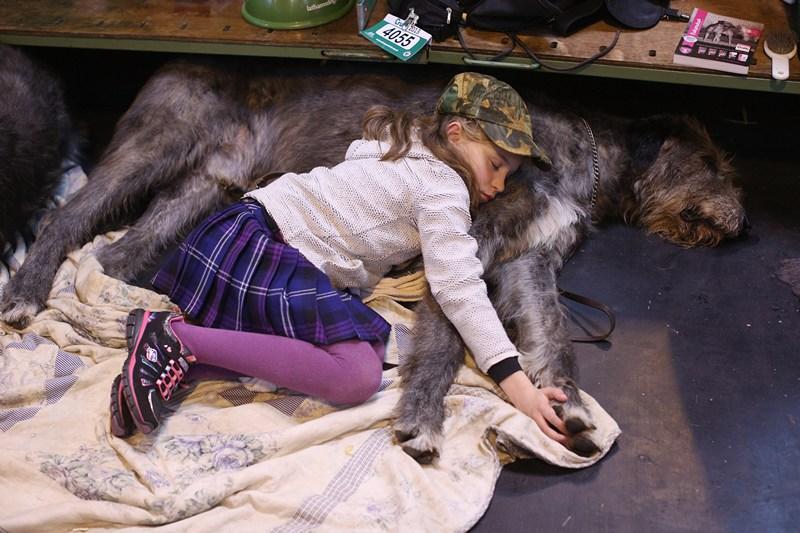 Бирмингем, Великобритания, 7 марта. 9-летняя Кэйтлин отдыхает вместе со своим питомцем, ирландским волкодавом, на всемирно известной выставке собак «Крафт». Фото: Oli Scarff/Getty Images