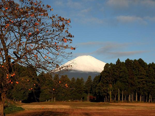 Снежные вершины Фудзи. Фото: Koichi Kamoshida / Getty Images