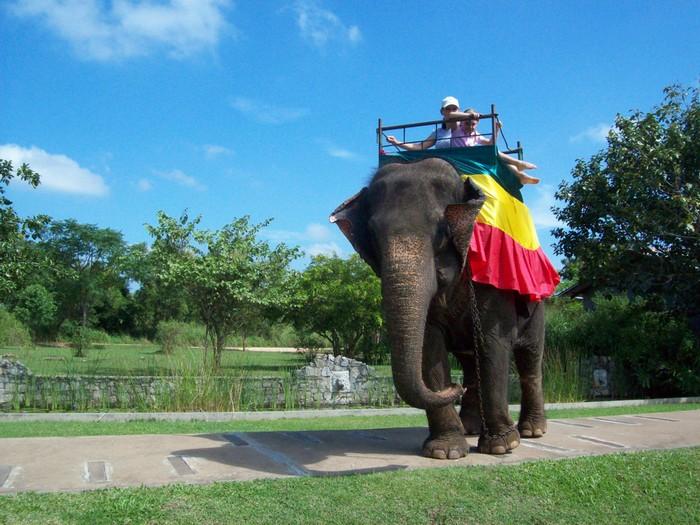А ще можна покататися на слонах. Фото: Sri Lankan Boy/Flickr