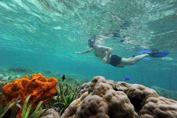 Турист ныряет на коралловом рифе 22 октября 2011 года в Mansuar острова Раджа Ампат, расположенного в восточном регионе Папуа в Индонезии. Это место считается последним раем на земле. Архипелаг Раджа Ампат внесен в список Всемирного наследия ЮНЕСКО. С