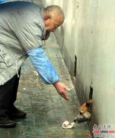 В районе Учан города Уханя собака уже три года живёт в подвале дома и не выходит на улицу, иногда только высовывает наружу морду, чтобы поесть то, что ей приносят местные жители. Фото с aboluowang.com