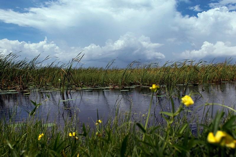 Национальный парк Эверглейдс, Флорида. Фото: Joe Raedle/Getty Images