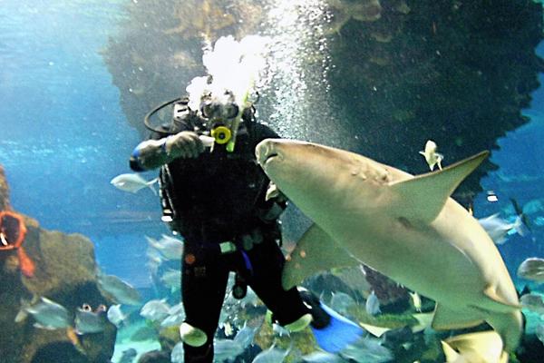 Дайвер годує акул в океанаріумі в Астані. Є близько двох тисяч морських мешканців, включаючи 100 прянощів морської фауни на три мільйони літрів. Фото: STANISLAV FILIPPOV / AFP / Getty Images