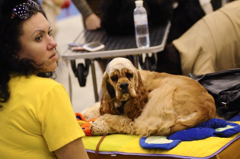 Международная выставка собак Золотые ворота прошла в Киеве 21-22 апреля 2012 года. Фото: Владимир Бородин / The Epoch Times Украина