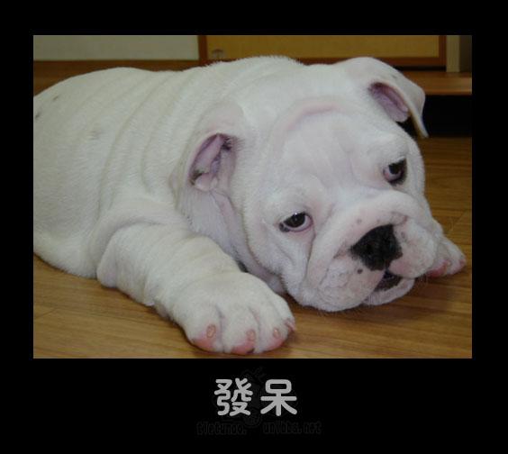 Оцепенение. Фото с secretchina.com