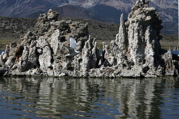 На озере Moнo были обнаружены неизвестные ранее бактерии, которые способны выживать там, где жизнь других микроорганизмов была бы невозможной. Фото: GABRIEL BOUYS/AFP/Getty Images