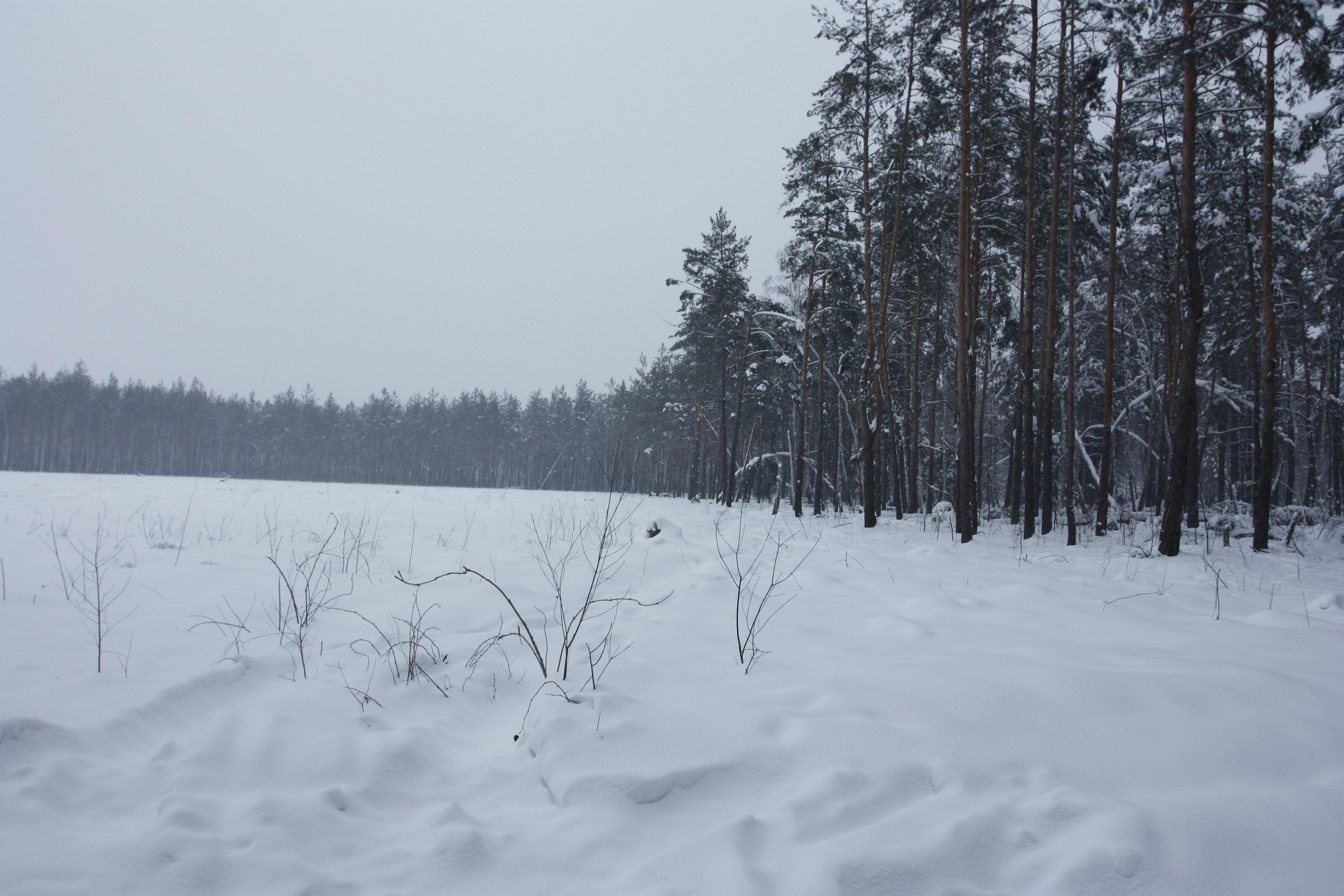Участок леса, вырубленный с ноября по декабрь 2011 года. Фото: The Epoch Times Украина
