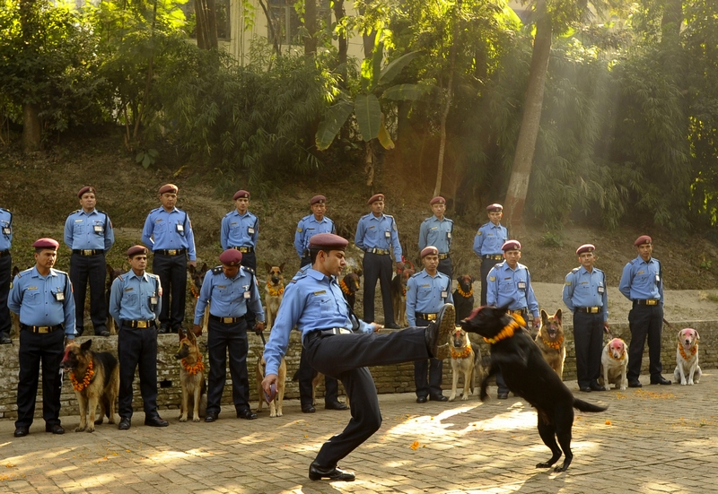 Катманду, Непал, 13листопада. Поліцейський і його службовий пес демонструють професійні навички в рамках свята Тіхар або непальського «фестивалю вогнів». Фото: PRAKASH MATHEMA/AFP/Getty Images