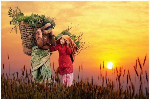Богатый урожай. Фото: epochtimes.com