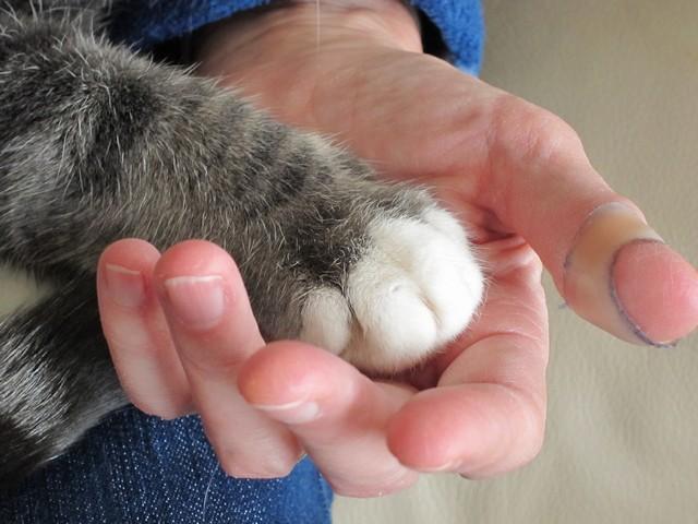 Кошки — не только всеми любимые домашние животные, но и отменные лекари, способные излечить своих хозяев от многих болезней и продлить их жизнь. Фото: morguefile.com