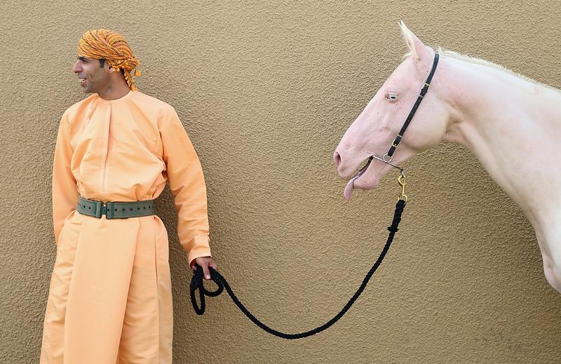 Маскат, Оман, 18 березня. Вершник з конем рожевого забарвлення очікує початку церемонії зустрічі принца Чарльза і його дружини Камілли. Фото: Chris Jackson/Getty Images
