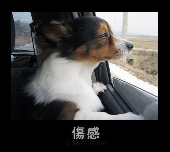 Грусть. Фото с secretchina.com