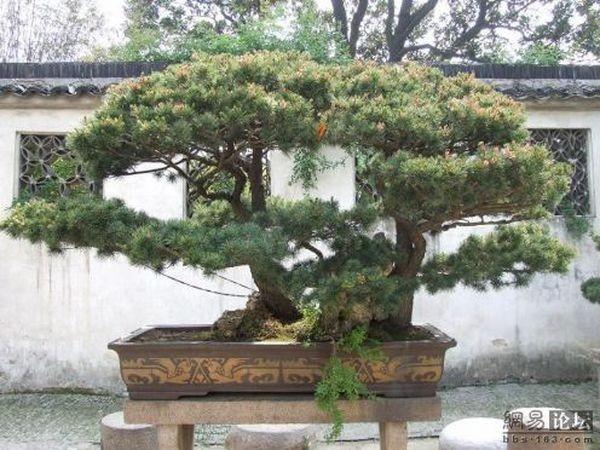Коллекция пэнцин из города Сучжоу. Фото с aboluowang.com