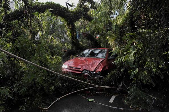 Огромное дерево упало в результате сильного урагана, не виданного за 44 года. Сан- Пауло, Бразилия, 4 февраля 2010. Фото: MAURICIO LIMA/AFP/Getty Images