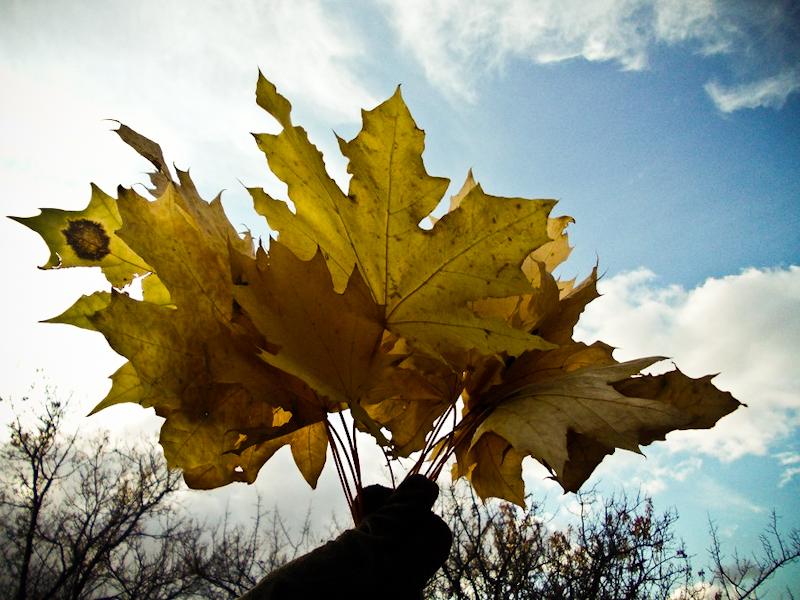 Золота осінь 2011. Фото: The Epoch Times Україна