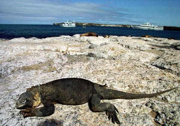 Мир Галапагосских островов. Фото: RODRIGO BUENDIA/AFP/Getty Images