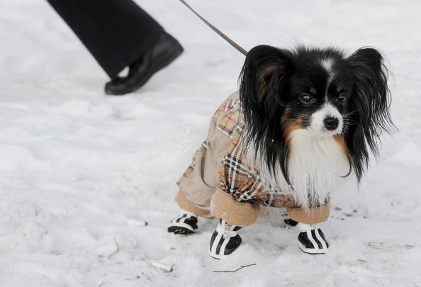 В Москву пришли сильные морозы. Фото NATALIA KOLESNIKOVA/AFP/Getty Images