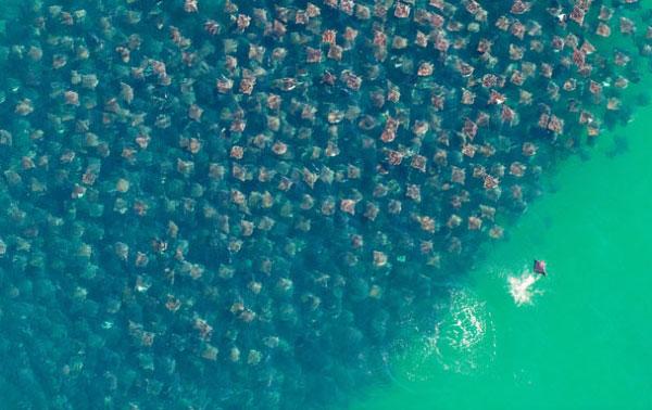 Работа-победитель Полет скатов. Фото: pravda.com.ua