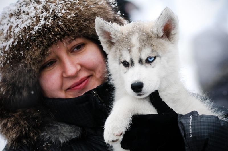 Чемпионат северных собак прошёл в Киеве. Фото: Владимир Бородин / Великая Эпоха