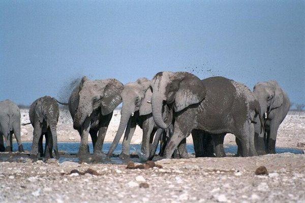 Слон. Фото: trinixy.ru