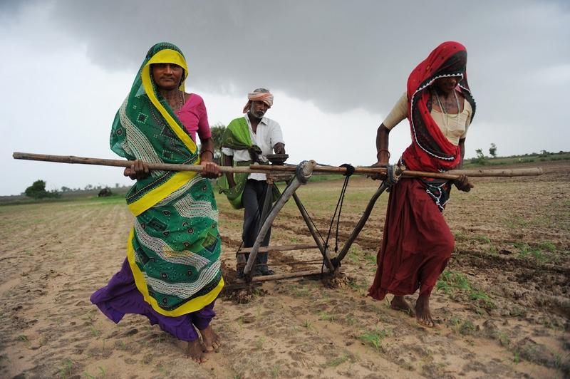 Деревня Нани Кисол возле Ахмедабада, Индия, 11 июля. Фермеры вспахивают поле для посева хлопка. Фото: SAM PANTHAKY/AFP/GettyImages