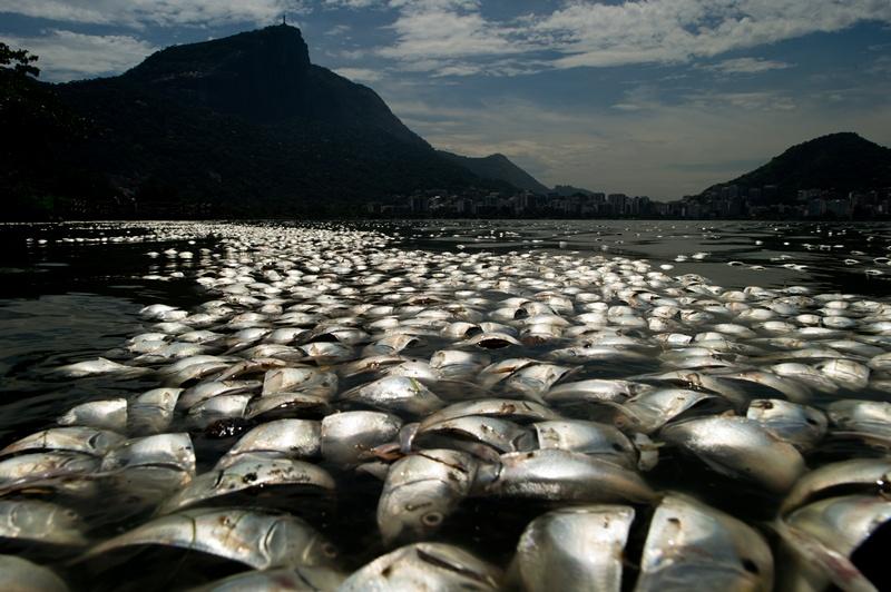 Ріо-де-Жанейро, Бразилія, 13 березня. Тонни мертвої риби плавають у водах лагуни Родріго-де-Фрейтас поруч з горою Корковадо. Фото: CHRISTOPHE SIMON/AFP/Getty Images