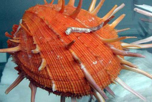 Уникальная коллекция морских раковин. Фото: Юлия Ламаалем/The Epoch Times