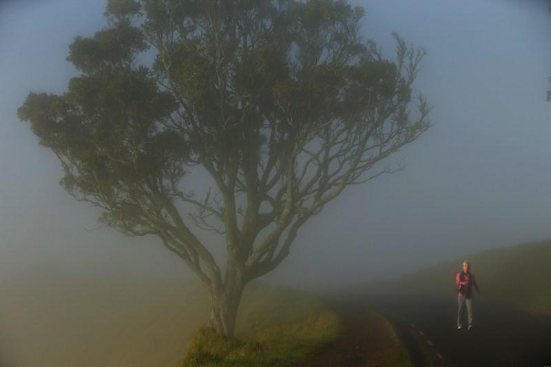 Окленд, Нова Зеландія, 6 липня. Місто огорнув сильний туман, через що довелося скасувати ранкові авіарейси. Фото: Phil Walter/Getty Images