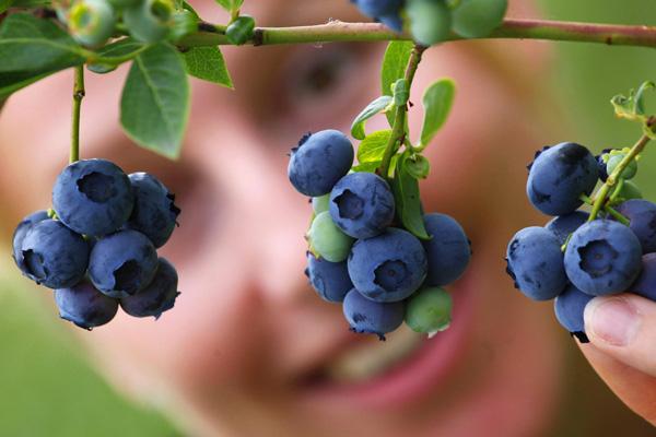 Эти продукты защищают кровеносные сосуды и улучшают зрение, уменьшают тахикардию, мышечную боль и напряжение, охлаждают и успокаивают. Фото: MICHAEL URBAN / AFP / Getty Images