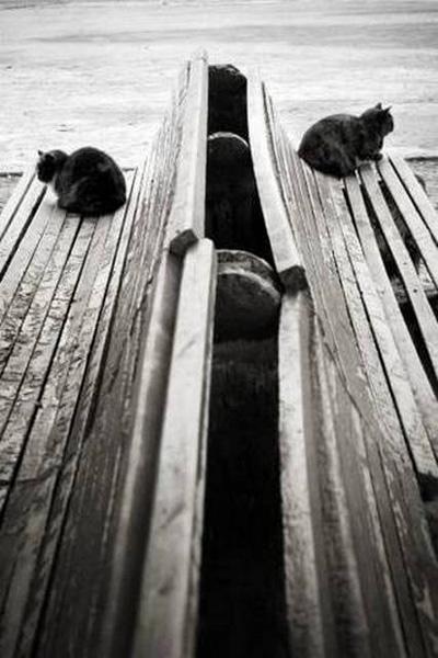 «Размолвка», Ирина Покровская, г. Симферополь. Фото: fotosalonsevast.ucoz.ru